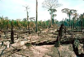 Agricultura de tala y quema.