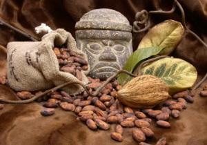 El cacao: su fruto y sus semillas. Origen del riquísimo chocolate.